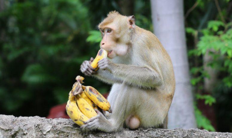 朝バナナダイエットをやりすぎてサルかと勘違い
