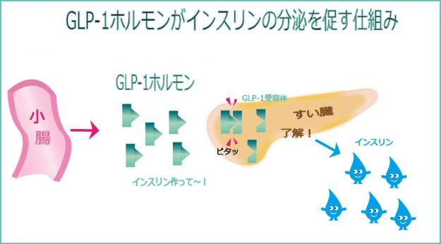 GLP-1ホルモンがインスリンの分泌を促す仕組み