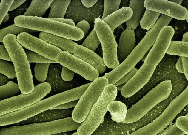 感染症のもととなる菌