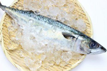 鯖から摂れるEPAやDHAって何?オメガ3系って?魚で痩せる効果も紹介